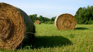 Looking for  Standing Hay and crop land for   2017 Kawartha Lakes Peterborough Area image 1