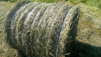 HAY - SECOND CUT - ROUND BALES HORSE QUALITY