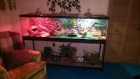 Large Tank for Sale