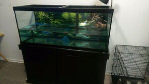 75 gallon tank with two turtles
