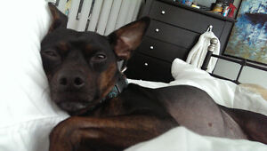 LOOKING TO ADOPT/REHOME A SMALL-MEDIUM SIZED DOG