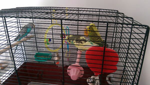 Parrots for free