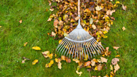 LEAF COLLECTION AND FALL CLEAN UPS