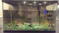 10 GALLON FISH TANK W/ FISH