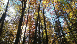 Looking for Woodlot/Acreage for Sale in Sussex Area