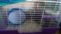 Chinchilla looking for good home