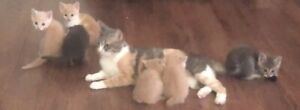 6 Kittens for Sale $20 Each,or 2 for $30