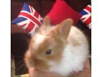 Baby 👶 rabbit 🐰