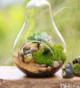 Pear Shaped Hanging Glass Terrariums (7 Available) St. John's Newfoundland image 2