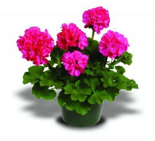 Plant Plugs Ebay