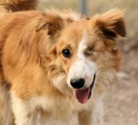 """Young Male Dog - Border Collie: """"Creed"""""""