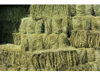 Small square hay bales