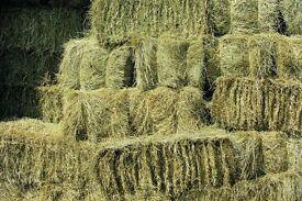 40 small bales of hay