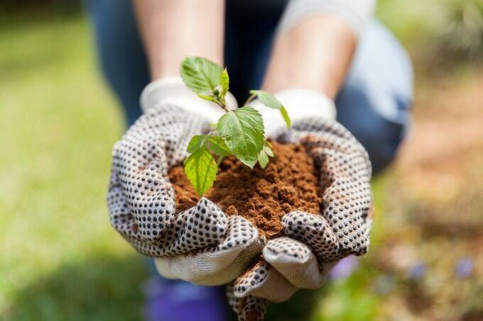 gloved hands holding seedling