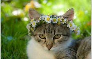 Pet Sitting Plus :)  !!!!! :) London Ontario image 3