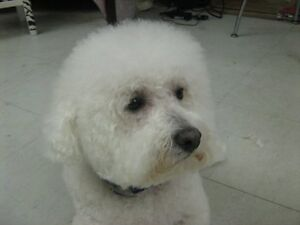 Dog grooming by Lori in Owen Sound