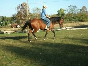 Looking to spend some time with horses!
