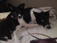 Dog walker & sitter