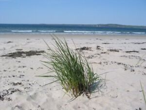Want to spend the season at Crescent Beach, LaHave Area?