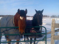 Equine Farm Sitting Available