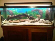 Large fishtank with Jarrah stand, light and filter Morley Bayswater Area Preview