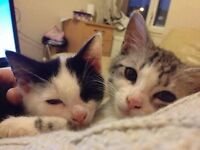 Two Cats in need of forever home
