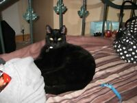 Adult Male Cat, 10 years old Loving home wanted Blackpool