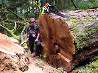 Tree removal / pruning