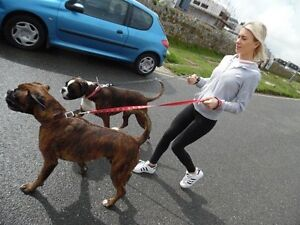 CHEAP DOG WALKING IN CRONULLA Cronulla Sutherland Area Preview