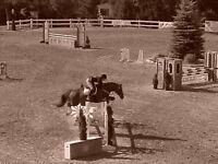 English and Western Riding lessons available- 45/h private