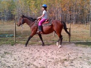 12 yr old mare Pending Sale