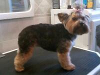 The Grooming Gallery - Free Grooming For Puppies under 3 months