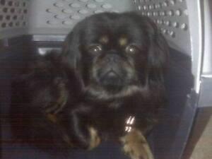 $10,000 Reward for Missing Dog -JJ