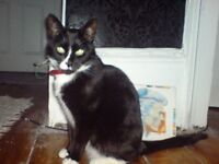 Missing Cat- not seen since Saturday 22/10 Leith