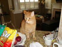 CATS NEEDING LOVING HOME