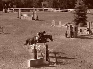 Horseback riding lessons available !!!