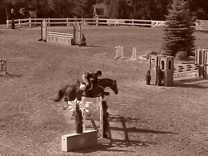 English/ Western Riding lessons available- 45/h private 15$ off