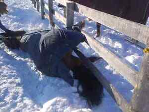Equine First Aid Course In Clifford Ont Sat Oct 1 Stratford Kitchener Area image 7