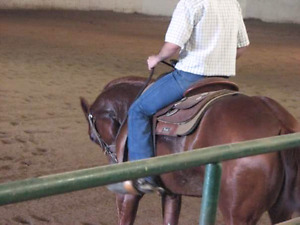Looking to trade - horse time 4 training &/or teaching