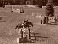 English horseback riding lessons