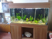 5ft Tank for sale