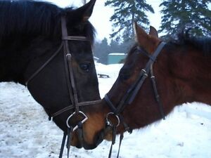 Lesson Horse Wanted in Exchange for Reduced Board