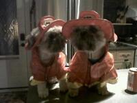 ADORABLE Halloween Costumes for sm-med dogs or cats