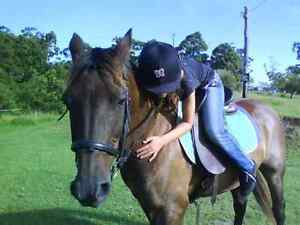 QUIET Horse, Standbred Glding,15hh, 16yrs old, beautiful nature!! Taree Greater Taree Area Preview