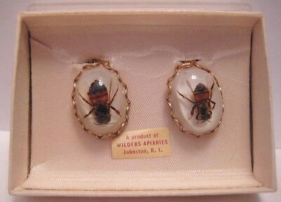 Old 1950s Lucite Honey Bee Earrings Souvenir Wilders Apiaries Johnston R.I.