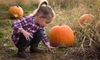 Pumpkin Mini Sessions