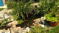 DON'T SETTLE FOR LESS THEN THE BEST FOR YOUR POND OASIS!!