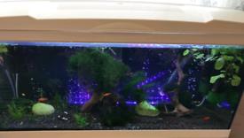 80l fish tank full setup