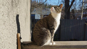 Lost Tabby cat in Connaught area - May long weekend