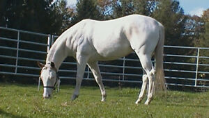 2015 APHA mare